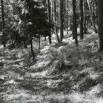 Kręgi anielskie koło Grobli, wrzesień 2011