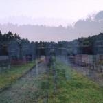 Sarajewo, do piosenki Jaromira Nohavicy