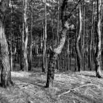 Czarny las w Zielonce