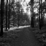 Droga do Drewnicy