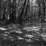 Lasy Ryjewskie